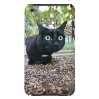 alerted cat hiding under bush. barely there iPod case