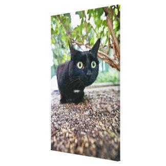 alerted cat hiding under bush. canvas print