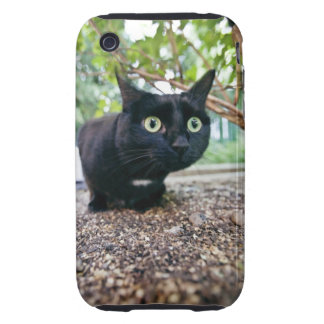 alerted cat hiding under bush. iPhone 3 tough cover