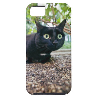 alerted cat hiding under bush. iPhone 5 covers