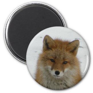 Aleutian Fox Magnet
