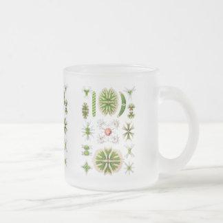 Algae Frosted Glass Coffee Mug