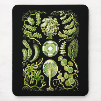 Algae Mouse Pad