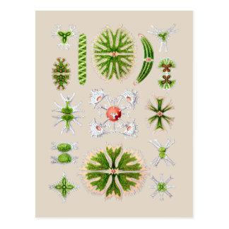 Algae Postcard