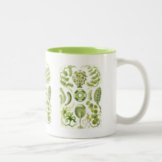 Algae Two-Tone Coffee Mug