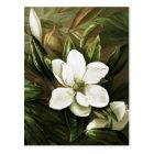 Alicia H. Laird: Magnolia Grandflora Postcard