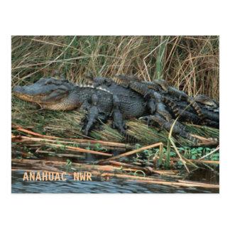 Aligator Mom Postcard