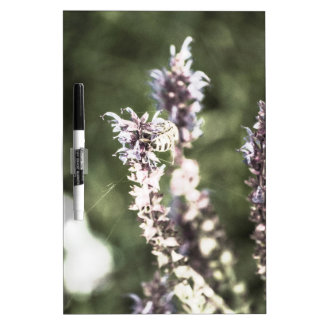 All About Pollen Dry Erase Board