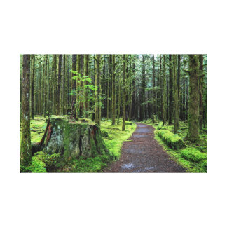 All covered with green moss magic forest by Alex L Canvas Print