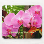 All In a Row Gorgeous Magenta Orchid