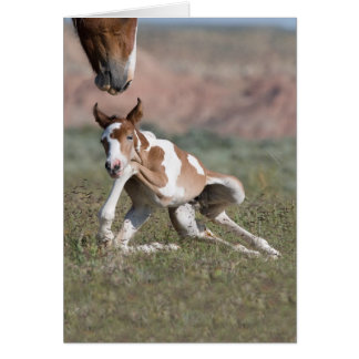 All Legs Wild Horse Greeting Card