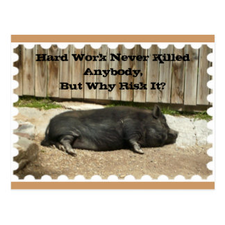 All Occasion Postcard with Pot Bellied Pig