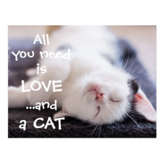 All you need is love...and a cat // kitten postcard