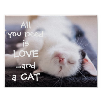 All you need is love...and a cat // kitten poster