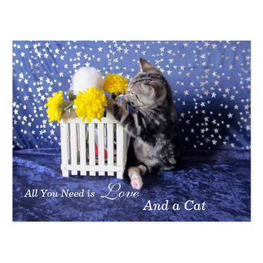 All You Need is Love - and a Cat - Lilo Postcard