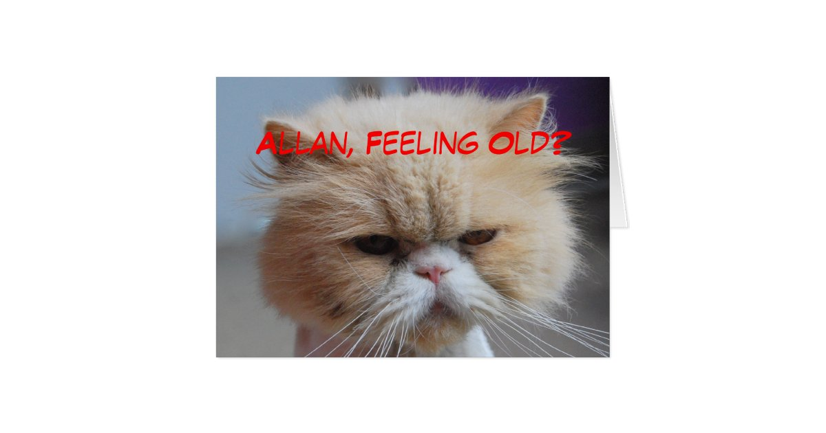Funny Cat Birthday Cards Photocards Invitations More – Humorous Cat Birthday Cards