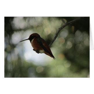 Allen's Hummingbird Blank Card