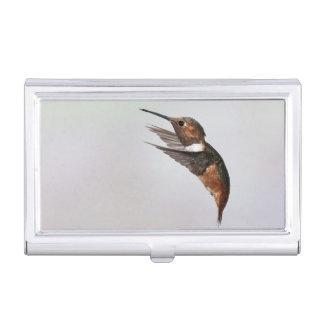 Allen's Hummingbird business card holder