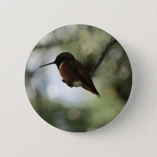 Allen's Hummingbird Button