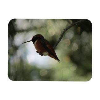 Allen's Hummingbird Flexible Photo Magnet