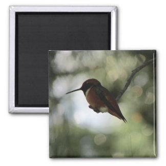 Allen's Hummingbird Photo Magnet