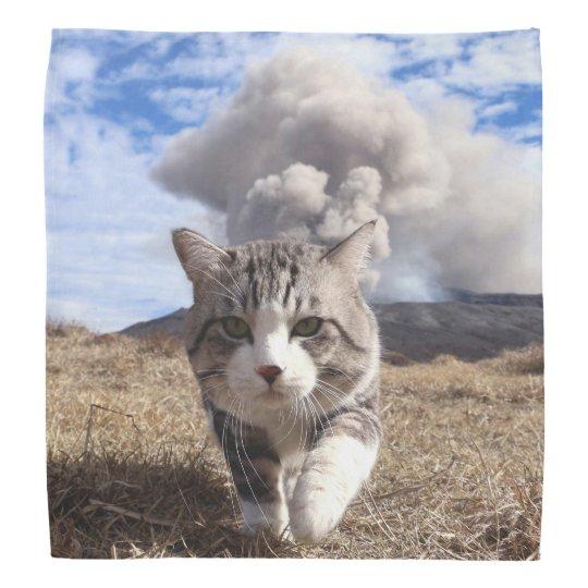 Alley cat niyan good fortune< Activity period > Head Kerchief