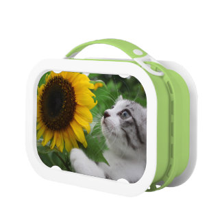 Alley cat niyan good fortune< Sunflower > Lunchboxes