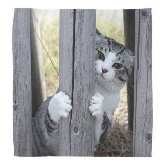 Alley cat niyan good fortune< While fleeing > Bandana