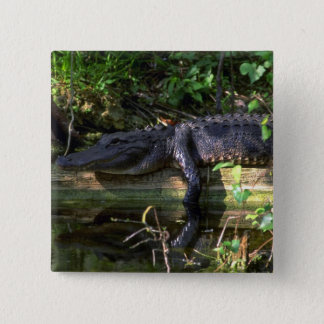 Alligator afternoon, Everglades, Florida 2 Inch Square Button