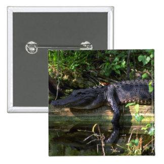 Alligator afternoon, Everglades, Florida 2 Inch Square Button