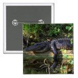 Alligator afternoon, Everglades, Florida Pinback Buttons