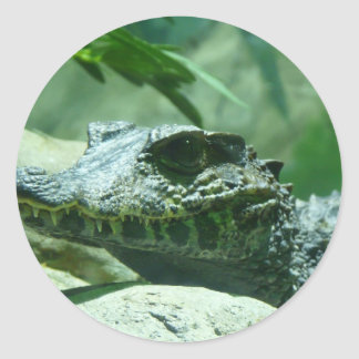 alligator,caiman classic round sticker