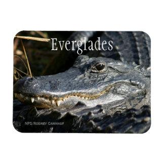 Alligator, Everglades Ntl. Park Magnet