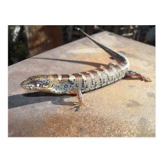 alligator lizard postcard