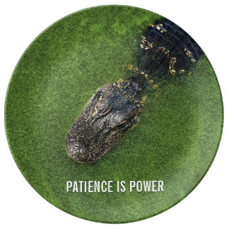 Alligator • Patience is Power • Florida Nature Plate