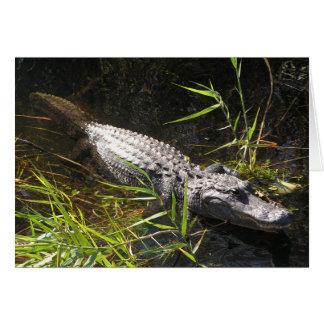 Alligator Photo Greeting Card