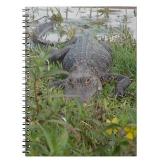 Alligator Photo Notebook