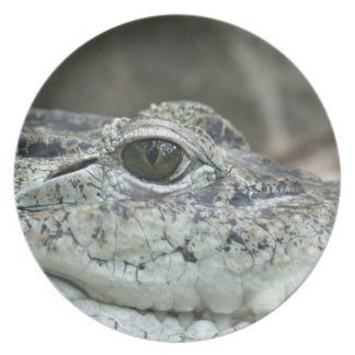 Alligator Photo Plate