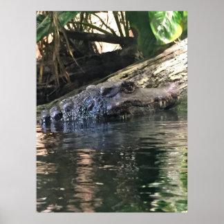 Alligator Photo Poster
