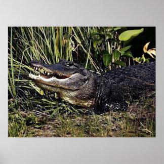 Alligator Portrait Poster Print