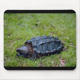 Alligator Snapping Turtle Mouse Pad