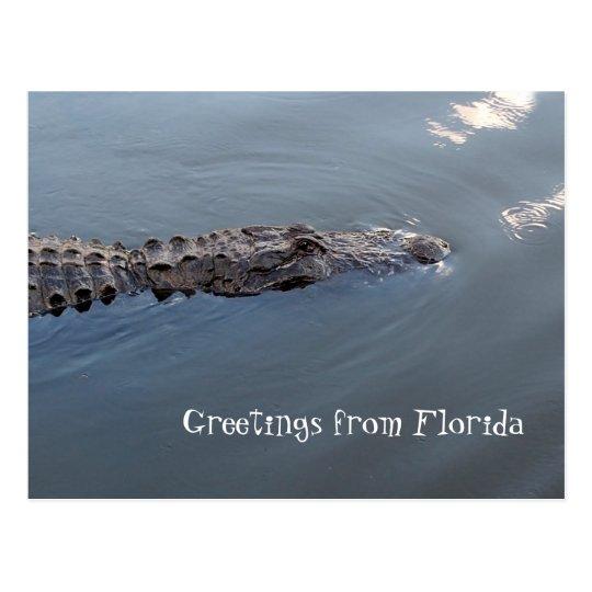 allligator swims in water postcard