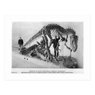Allosaurus skeleton art postcard