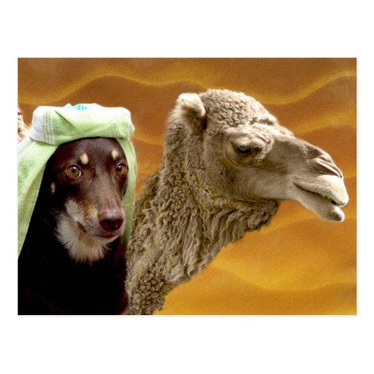 Ally of Arabia Postcard