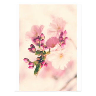 Almond blooms kind postcard