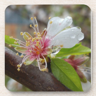 Almond blossom in the rain coaster