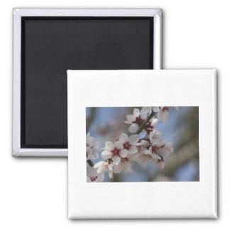 Almond Blossom Square Magnet
