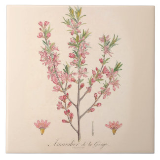 Almond Blossoms Printed Ceramic Tile Kitchen Decor