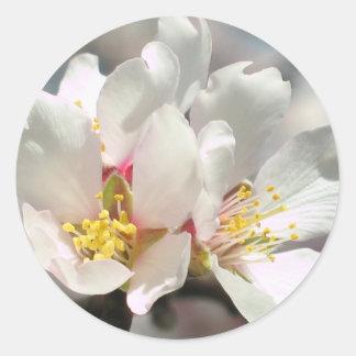 Almond Blossoms Sticker
