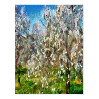 Almond Orchard Blossom Postcard